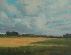 Yellow  Field, Sark Island oil on board